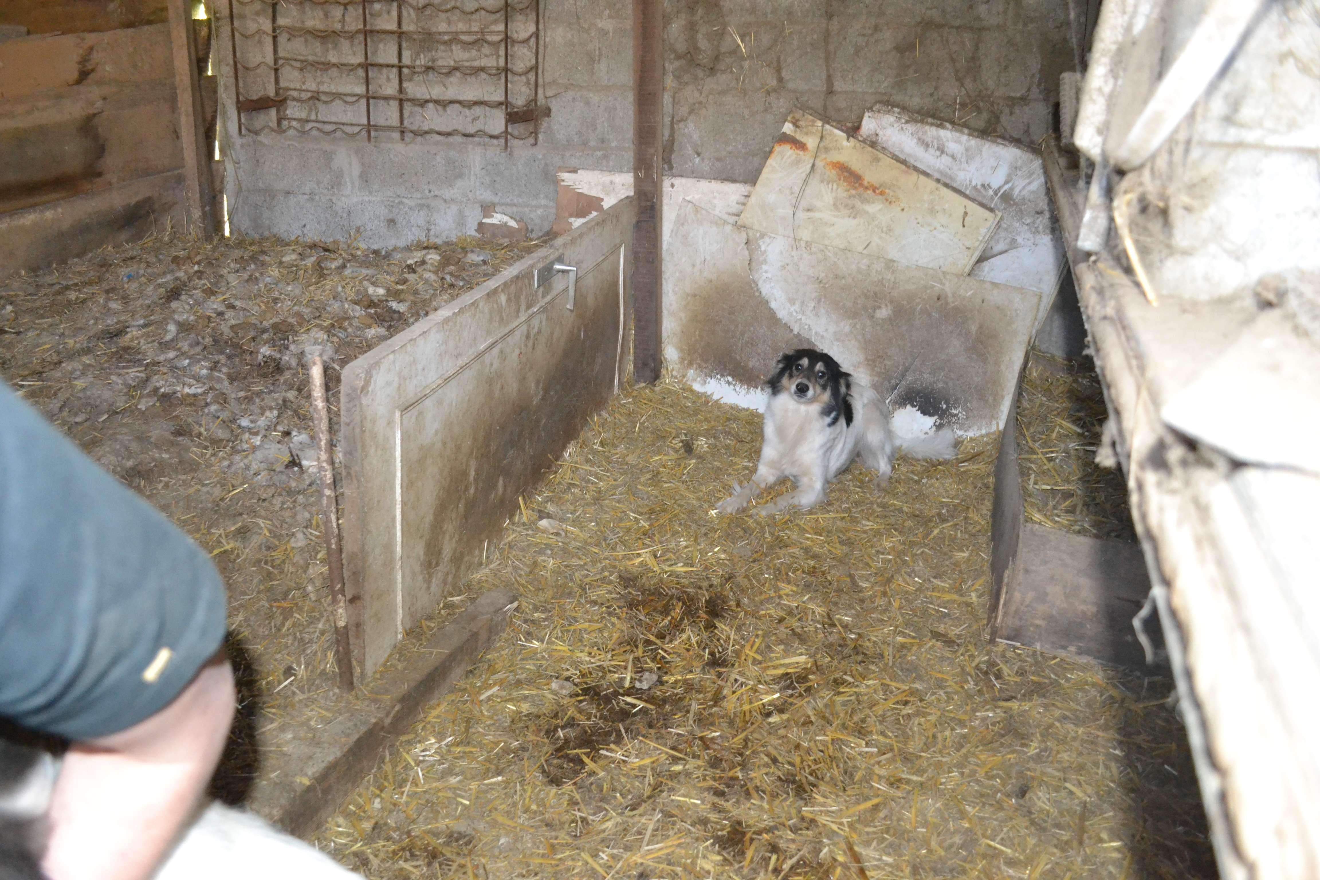 cherche association pour 3 chiens x border en situation tr s tr s pr caire 44. Black Bedroom Furniture Sets. Home Design Ideas